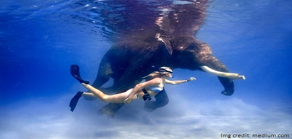 Swimming with Elephants at Havelock Island