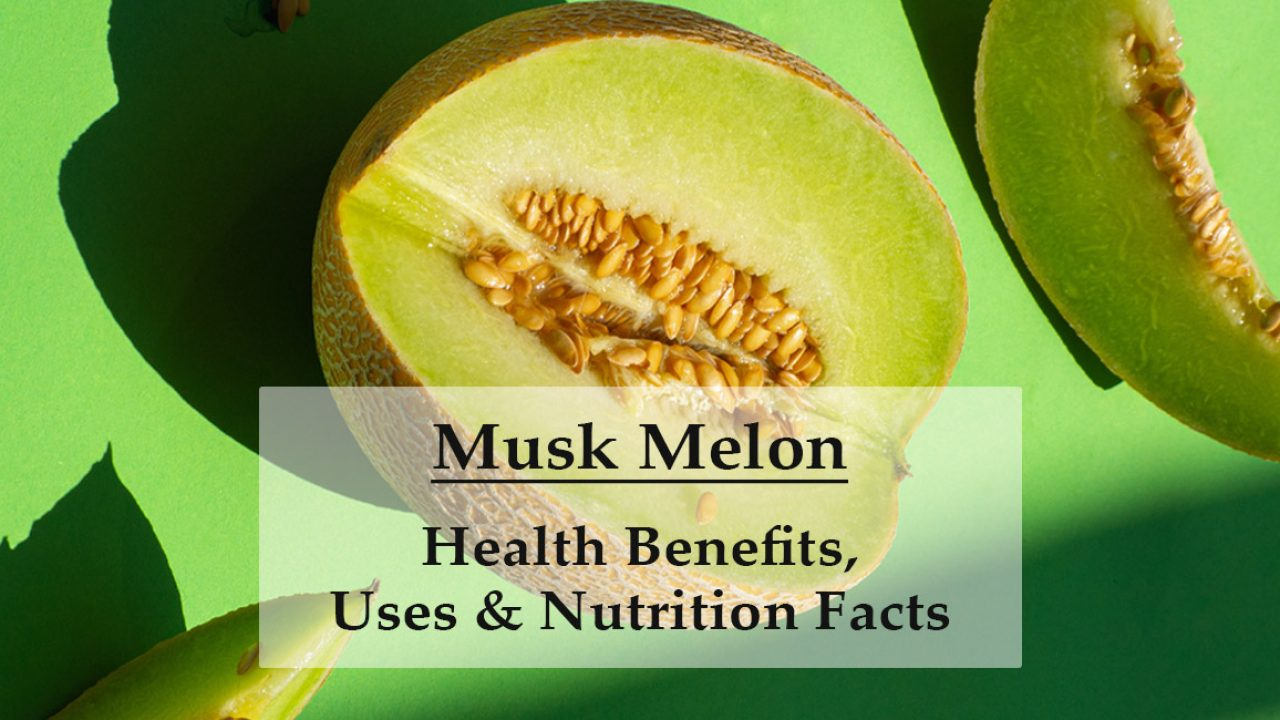 Muskmelon Health Benefits Uses Nutrition Facts Cantaloupes grow on long vines. muskmelon health benefits uses