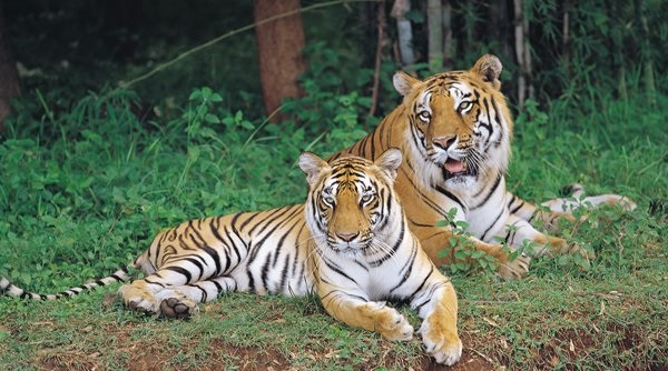 Bannerghatta National Park - Bangalore