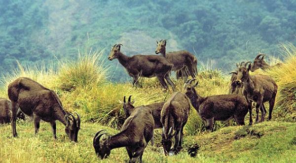 Eravikulam National Park - Kerala