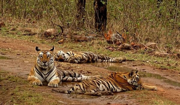 Panna National Park - Madhya Pradesh