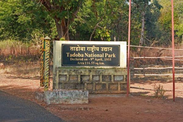 Tadoba National Park- Maharashtra