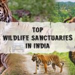Top Wildlife Sanctuaries in India for 2021 Safari Excursion