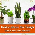 30 Indoor Plants That Bring Good Luck to Your Home & Office