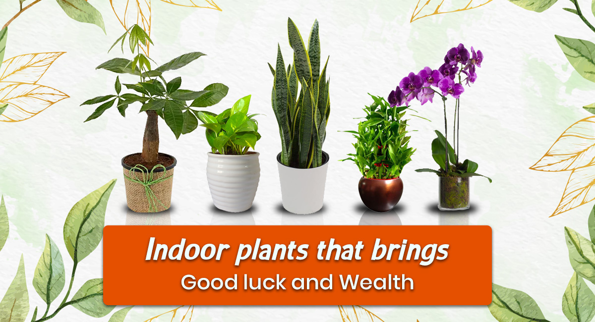 Best Indoor Plants for home & office