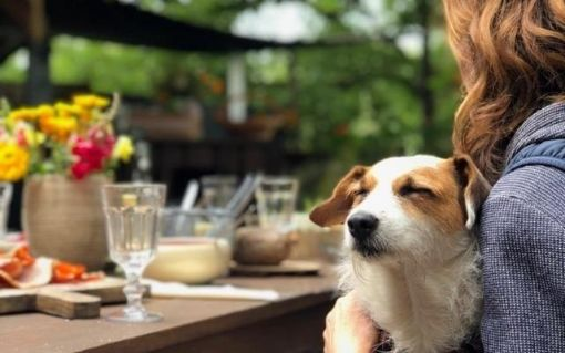 Diggin Cafe for Pets
