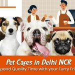 Pet Cafes in Delhi to Spend Quality Time with your Furry Friends