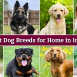 20 Best Dog Breeds for Home in India (2021)