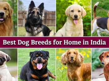 Best Dog Breeds for Home