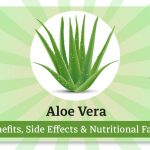 Aloe Vera Benefits, Side Effects & Nutritional Facts
