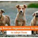 15 Dog Rescue Organizations In India to Adopt From