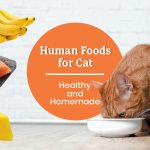 15 Human Food for Cats: Healthy and Homemade