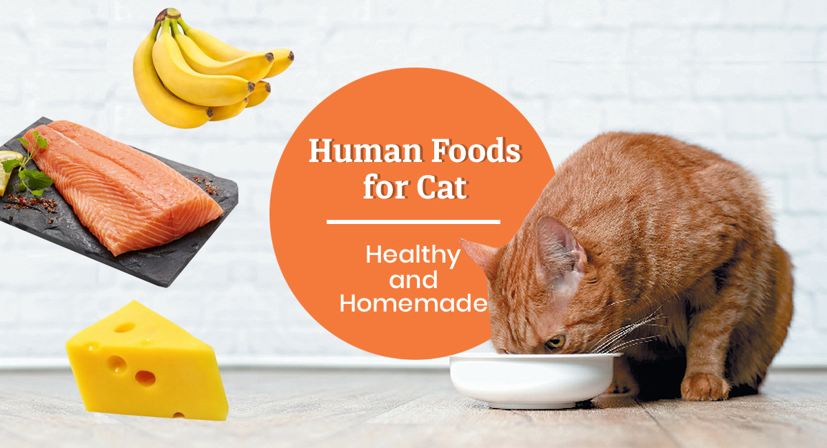 Food for Cats
