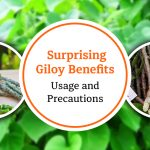 Surprising Giloy Benefits, Usage, and Precautions