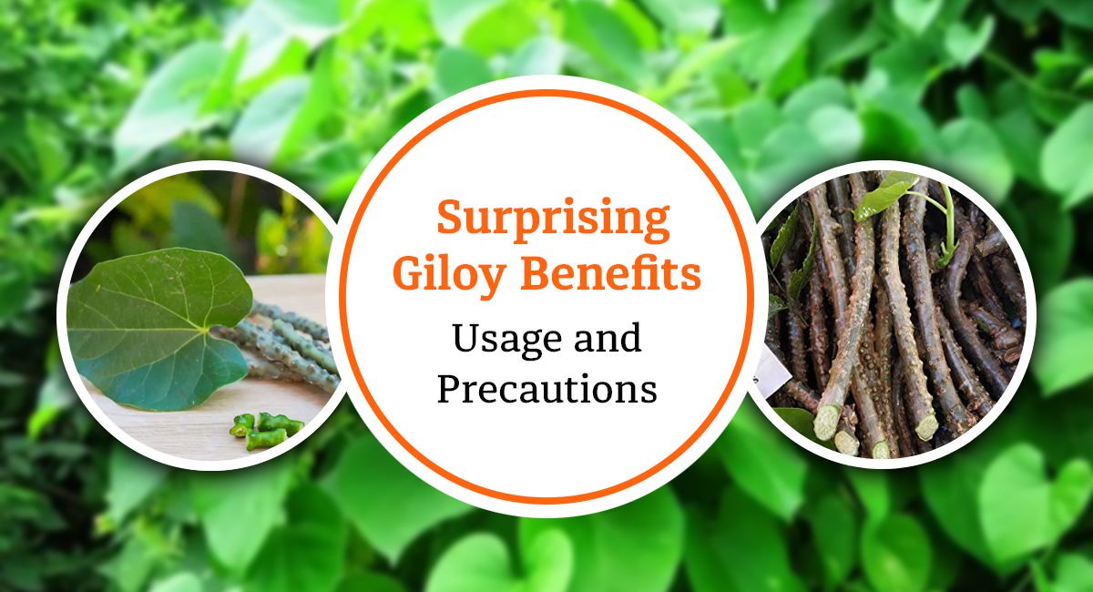 Giloy Benefits