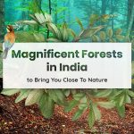 12 Magnificent Forests in India to Bring You Close to Nature
