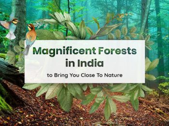 forests in India