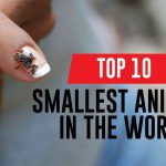 15+ Unique Smallest Animals in the World 2021