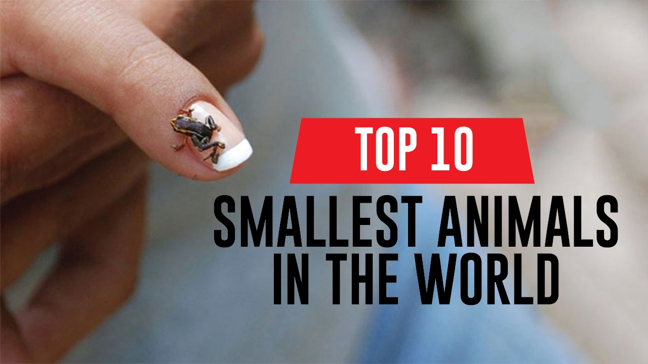 Smallest Animals