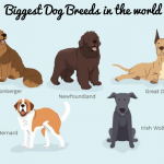 15 Biggest Dog Breeds in the World Worth Knowing