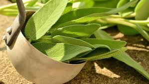 sage for weight loss