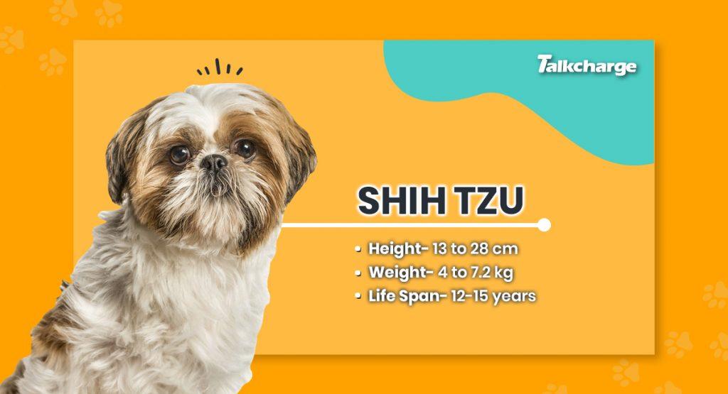 Shih Tzu - Small Dog