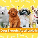 Small Dog Breeds Available in India: Home-Friendly Cute Dogs with Prices