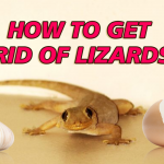 How to Get Rid of Lizards: Effective Ways & Home Remedies