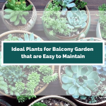 15 Ideal Plants for Balcony Garden That Are Easy To Maintain